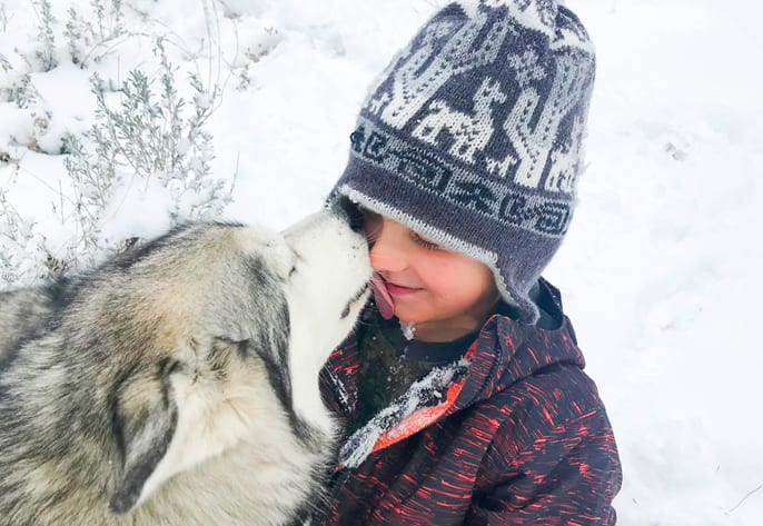 husky dog with boy outside in snow: Animal Hospital in Mount Prospect